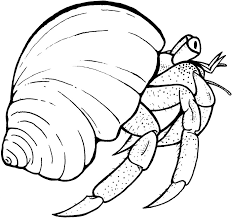 Small Picture Free Printable Hermit Crab Coloring Pages For Kids