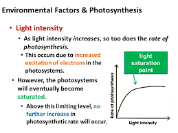 environmental factors photosynthesis light intensity as light intensity increases so too does the rate