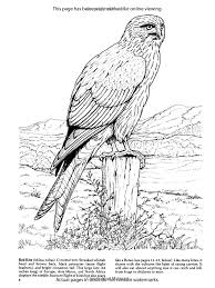 Small Picture Birds of Prey Coloring Book Dover Nature Coloring Book Amazon