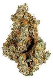 Ghost OG Strain - Hybrid Cannabis Video Review, CBD, THC : Hytiva