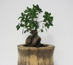 feng shui home office design. office feng shui plants home decor u0026 live out of design t