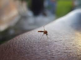 Mückenfalle Selber Bauen Videoanleitungen Tipps