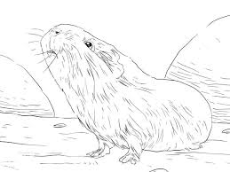 Small Picture Cute Guinea Pig Coloring Pages The Little Hamster Princess In Page
