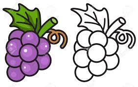 Illustration De Raisins Color Es Et Noir Et Blanc Isol S Pour