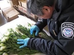 cbp agriculture specialist cbp officer job description