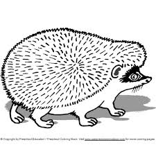 Small Picture Baby Porcupine Coloring Pages Coloring Coloring Pages