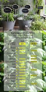 how to grow herbs outdoors beginner s