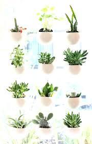 indoor herb garden ideas. Indoor Window Gardening Garden Apartment Best Ideas On Herbs Vertical . Indeterminate Herb