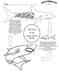 9253899?225 ocean stars schools resources ocean stars marine education on food web worksheet pdf