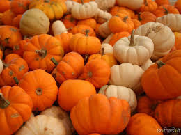 free pumpkin desktop backgrounds.  Backgrounds Pix For U003e Free Pumpkin Desktop Backgrounds