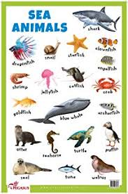 Buy Sds Learning Water Animals Chart For Kids Reading