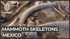 Mexico uncovers biggest collection of ice-<b>age mammoth</b> skeletons ...