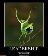 Funny Leadership Quotes Adorable SFI Forum Some Nice Leadership Quotes