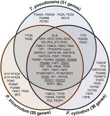 Genesis 1 And 2 Venn Diagram Genesis 1 And 2 Venn Diagram Magdalene Project Org