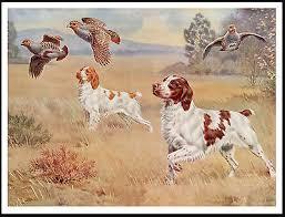 1930'S-40'S PRINT OF 2 Irish Setters & Spaniel dog on Point Bird Hunting -  $14.99   PicClick