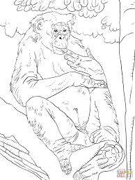 Small Picture Bonobo coloring page Free Printable Coloring Pages