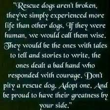 Rescue Dog Quotes Interesting Don't Pity A Rescue Dog Adopt One And Be Proud To Have Their