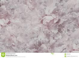 Bloemen Licht Roze Witte Mooie Achtergrond Behang Van Bloemen