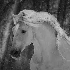 horses wallpaper black and white. Delighful Wallpaper Black And White Photography Images Horse Wallpaper  Background Photos Intended Horses Wallpaper And