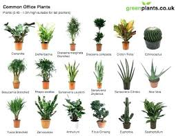 office plants no light. No Sunlight Plants Office Natural Light Best Indoor In Experiment Use T