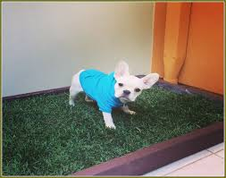 fake grass rug for dogs
