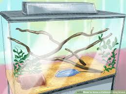 image titled keep a california king snake step 2