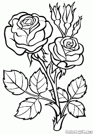 Select from 35478 printable coloring pages of cartoons, animals, nature, bible and many more. Coloring Page Rose