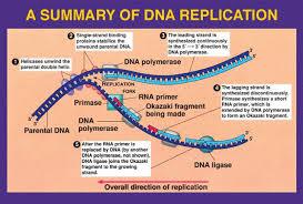 cascading books dna replication essay dna replication