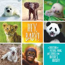 hey baby a collection of pictures poems and stories from nature s nursery by stephanie drimmer nov 2018 national geographic kids 24 99