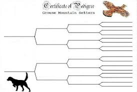 Blank Pedigree Chart For Dogs Free Pedigree Chart Template Shatterlion Info