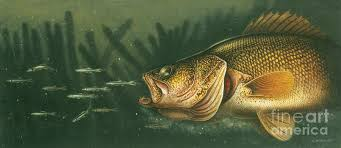 Image result for walleyes in weeds pics