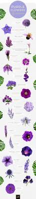 lavender lavandula lavender is one of the most recognizable purple flowers it s fragrant and calming scent is used in beauty and bath s like