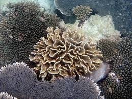 best the awesome ocean images ocean life sep 27 2223 tan towers photo essaycoral reefstowerscurrently