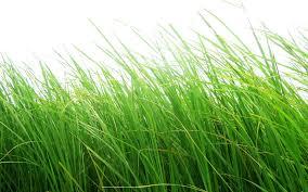 Grass Watercolor Grass Material 15933 Home Depot Grass Material 15933 Green Sky Landscape Scenery