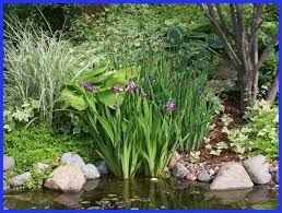 backyard ponds waterscapes inc
