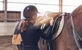 Znalezione obrazy dla zapytania pielęgnacja koni