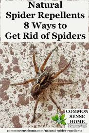 spider on wall with text overlay natural spider repellents 8 ways to get rid