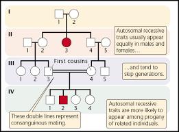 Biology Exams 4 U Pedigree Chart Autosomal Recessive Disorders