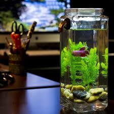 office desk fish tank. self cleaning betta aquarium i would really like to check this out office desk fish tank h