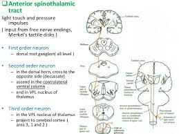 Ascending And Descending Tracts Of Spinal Cord