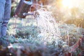 i water my vegetable garden
