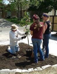 Image result for organicgreendoctor school garden