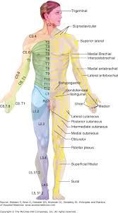 Chapter 75 Acute Back Pain Principles And Practice Of
