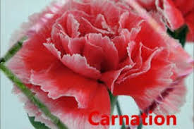 inspirational collection of diffe kinds of flowers and their names names of diffe flowers wmv