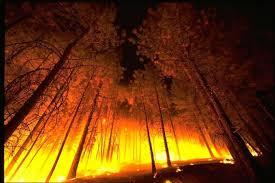С начала пожароопасного сезона в Иркутской области произошёл 191 пожар    ОБЩЕСТВО   АиФ Иркутск