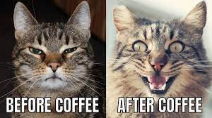 Before paycheck after paycheck before shaving after shaving before selfie after selfie before coffee ust a trim please before haircut after haircut before shower after shower before a kid calls you s after a. Cat Before Coffee After Coffee Two Photos And Text Meme