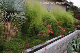 I love this evergreen combination of bamboo muhly, firecracker fern  (Russelia equisetiformis),… | Bamboo screen garden, Landscaping  inspiration, Landscaping austin