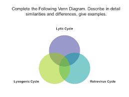 Lytic And Lysogenic Cycle Venn Diagram Viruses Nonliving Particles Very Small 1 2 To 1 100 Of A