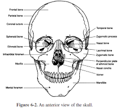 Small Picture Anatomy Skull Coloring Pages Coloring Pages Ideas