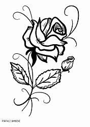 Fiori Da Disegnare Facili Disegni Di Rose Da Stampare E Colorare